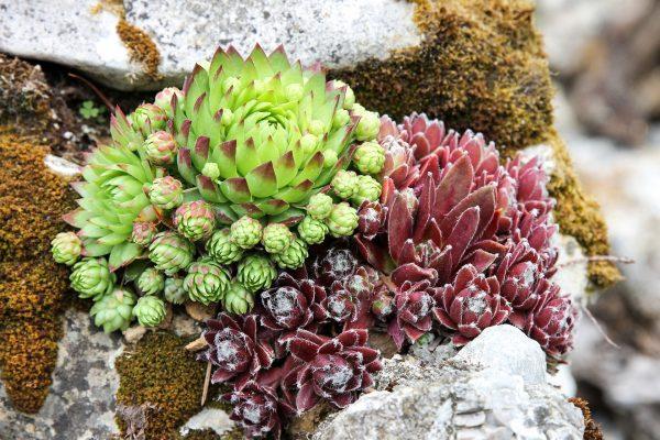 Créez votre jardin sec contemporain
