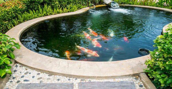 Comment construire un bassin dans son jardin ?